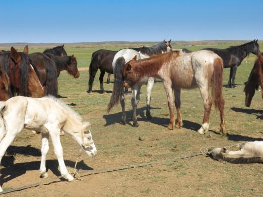 Color quiz #2 – What color is the foal? Hint – he is not albino.