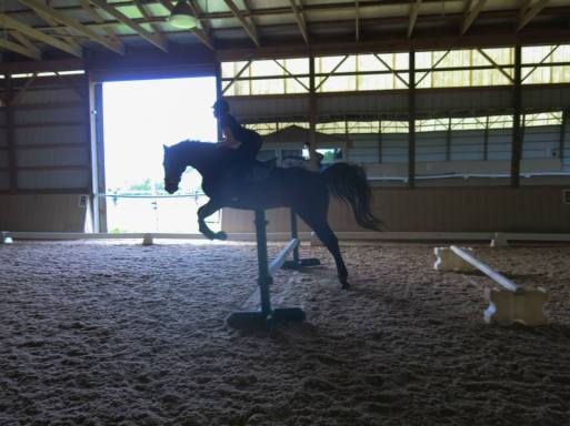 Townie: Helen's show jumping horse teaching me to jump bouncers