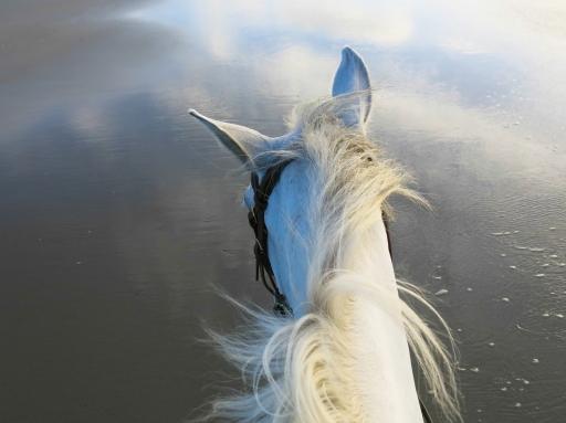 Spickey, the Pegasus