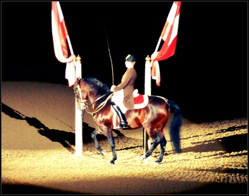 Interesting fact: Horses will enter the arena only once, while riders may perform 2-3 times a day. Picture taken from http://thewaytoheavenisonhorseback.blogspot.com/2012/11/mystical-spanish-riding-school-part-two.html