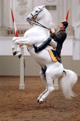 Picture was taken from http://wakeupandsmellthejoy.com/2014/09/the-spanish-riding-school/